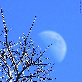 Reaching For The #moon.  #perspective by Austin Tuxedo Cat