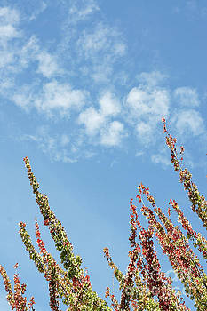 Reaching for the Sky by John  Mitchell