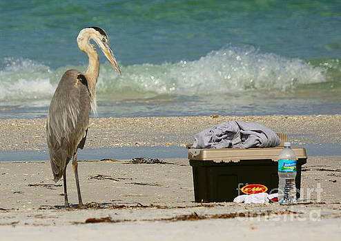 Ready for a day at the beach by Myrna Bradshaw