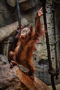Nikolyn McDonald - Ready to Swing - Orangutan