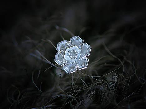 Real snowflake - 29-Jan-2018 - 1 by Alexey Kljatov