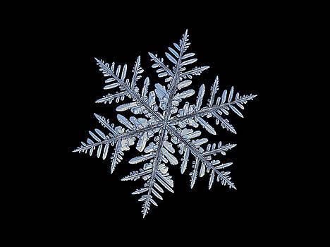 Real snowflake - Silverware black by Alexey Kljatov