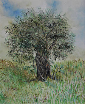 Reborn old olive tree by Anna Witkowska