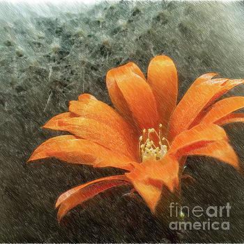 Heiko Koehrer-Wagner - Rebutia muscula Bright Orange Flower