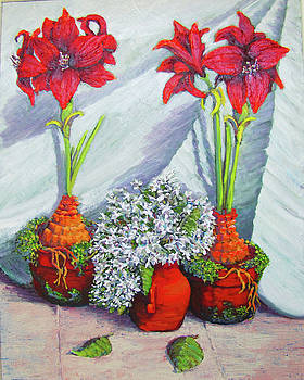 Red Amayrillis by Thomas Michael Meddaugh