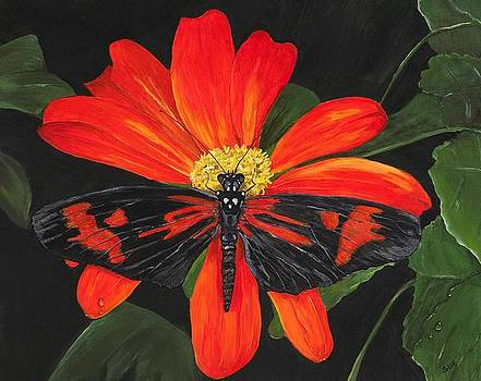 Red And Black Butterfly by Sue Ervin