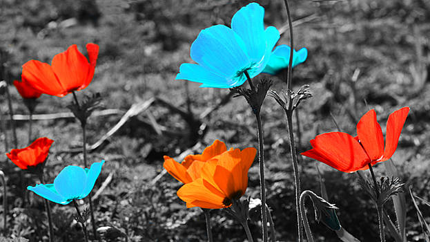 Red and blue flowers on gray background by Nika Lerman