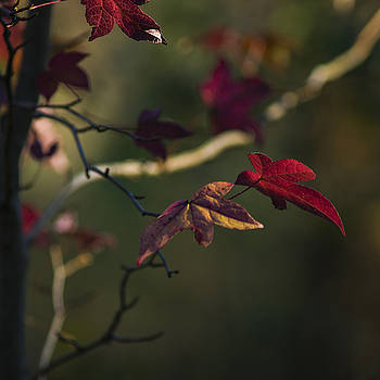 Red and Gold 2 by Billy Stovall