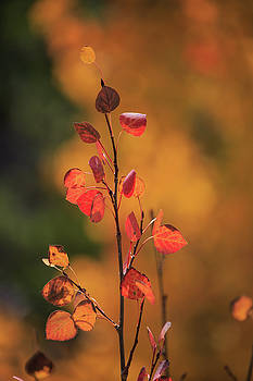 Red and Gold by David Chandler