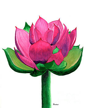 Red and Pink Lotus Floral Watercolor Painting 619 by Ricardos Creations