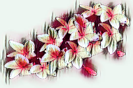 Red and White Frangipani by Debra and Dave Vanderlaan