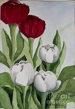 Red and White Tulips by Penny Stroening