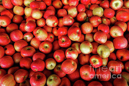 Red And Yellow Apples by Paul Mashburn