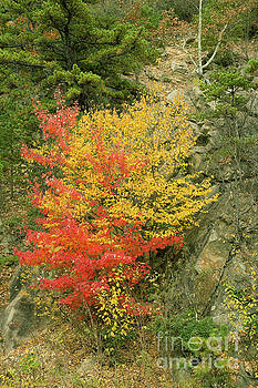 Red and yellow autumn leaves on Blue Ridge Parkway in October by Louise Heusinkveld