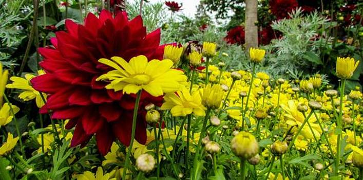 Red and Yellow Flowers by Cesar Vieira