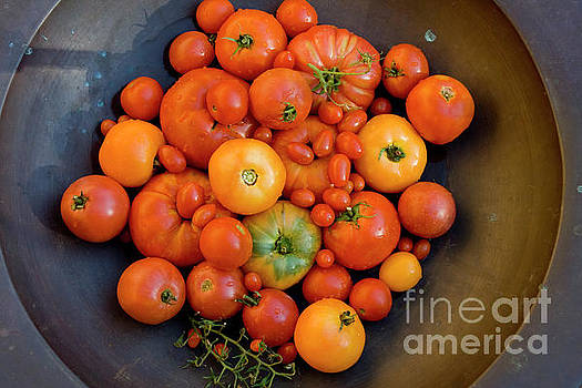 Red and Yellow Heirloom Tomatoes by Sharon Foelz