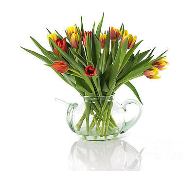 Compuinfoto  - red and yellow tulips