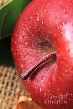 Red Apple Close Up by Teresa Thomas