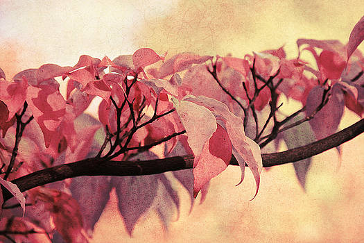 Angela Doelling AD DESIGN Photo and PhotoArt - Red Autumn Day