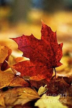 Red Autumn by Gary Bridger