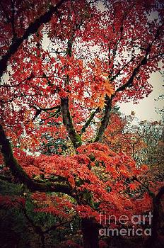 Red Autumn by Kiana Carr