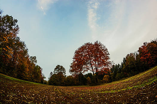 Chris Bordeleau - Red Autumn Maple
