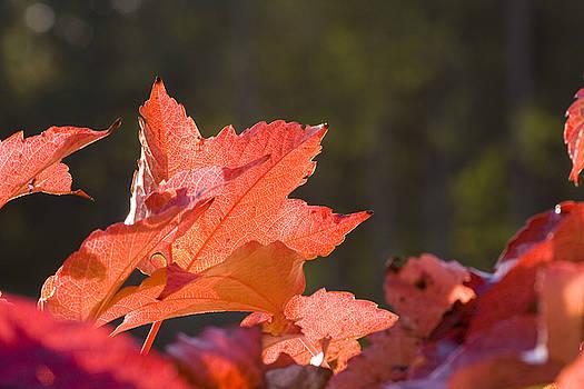Red Autumn by Marc Huebner