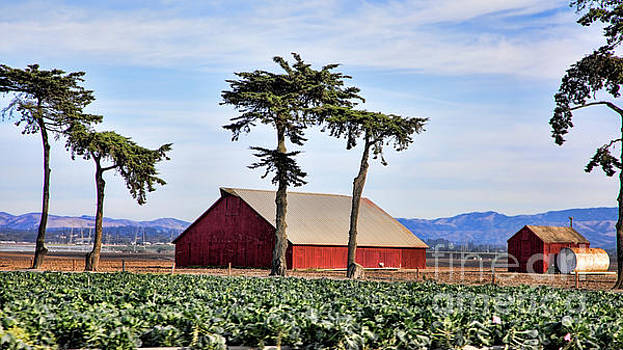 Chuck Kuhn - Red Barn Agriculture California