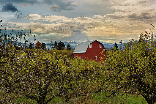 Red Barn at Pear Orchard by David Gn