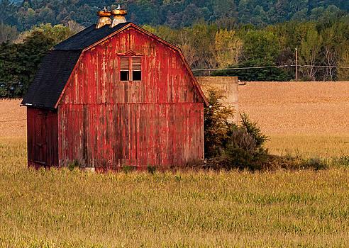 Red Barn in a Corn Field by Susan Schmidt