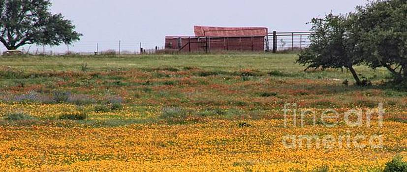 Red Barn in Wildflowers by Toma Caul