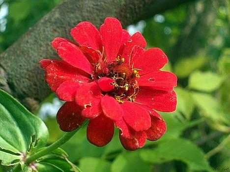Red Beauty by Ivana  Egic