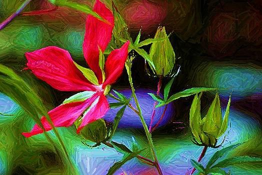 Red Beauty by Jeffery Bennett