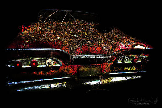 Red Belle by Glenda Wright