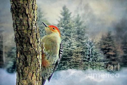Red Bellied Woodpecker  by Janette Boyd