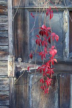 Red by Bernadette Kazmarski