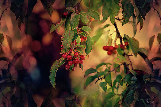 Red Berries at Sunset by Theresa Campbell