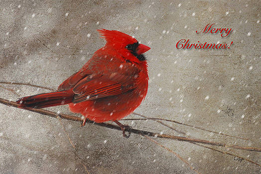Lois Bryan - Red Bird In Snow Christmas Card