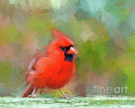Red Bird by Kerri Farley