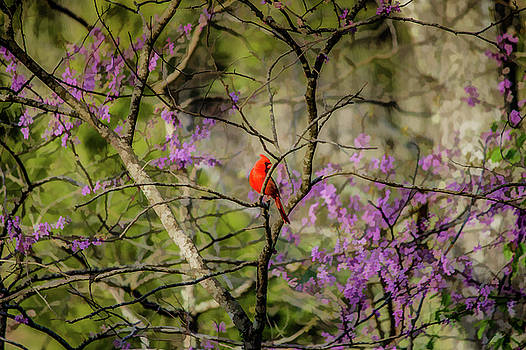 Lisa Lemmons-Powers - Red Bird