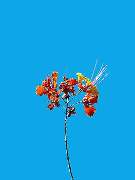 Stan  Magnan - Red Bird of Paradise