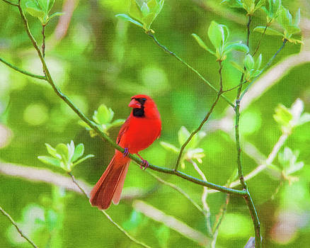 Red Bird Spring Green by Cathy Kovarik