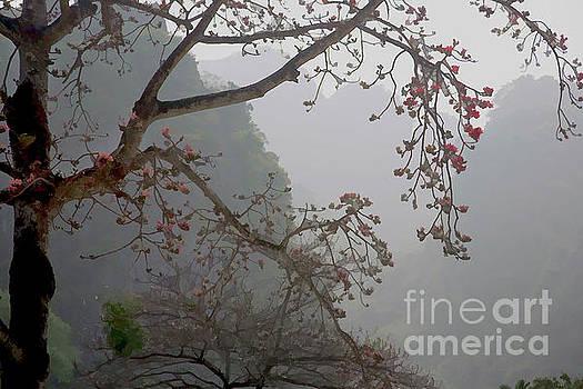 Chuck Kuhn - Red Blossoms  Vietnam