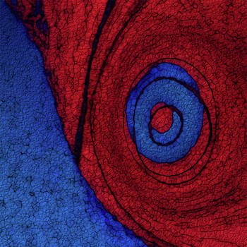 Red Blue Abstract by Jack Zulli