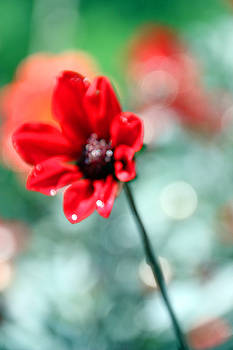 Carolyn Stagger Cokley - red bokeh