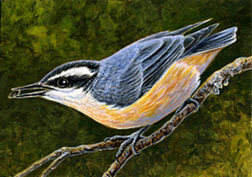 Red-breasted Nuthatch ACEO by Shari Erickson