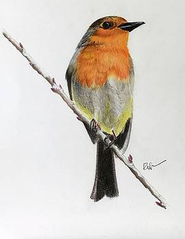 Red Breasted Robin by Ralph Duncan