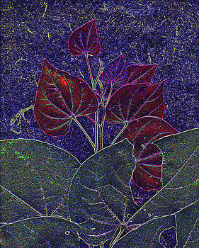Red Bud by Richard McRee