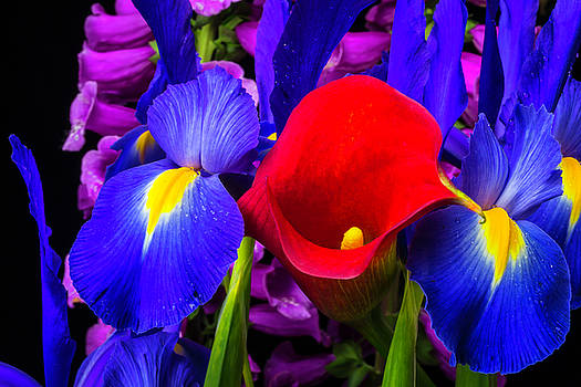 Red Calla Lily With Blue Iris by Garry Gay