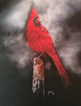 Red cardinal  by Henry Gonzales